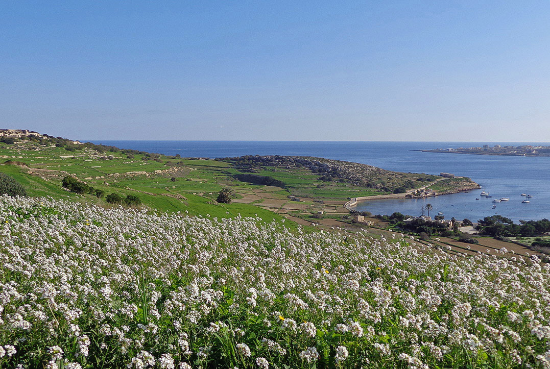 Mellieha Countryside overlooking St Pauls Bay