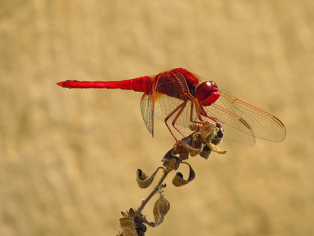 Valley wildlife - dragonfly