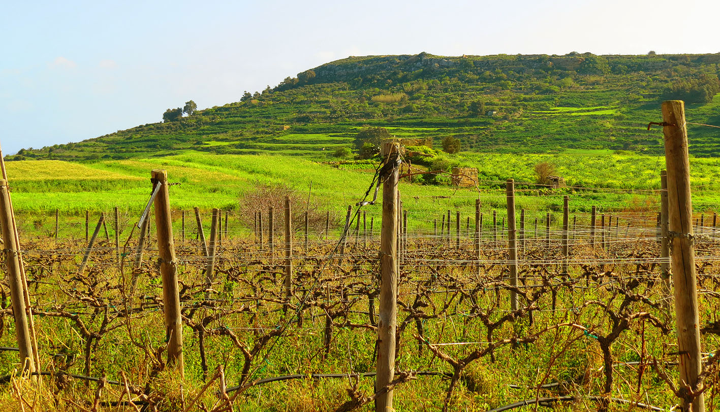 Gozo Vineyards