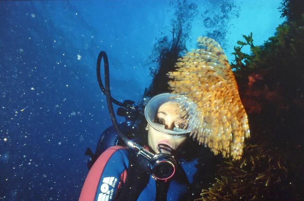 Diving in Malta & Gozo